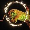 Цирки в Подольске