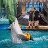 Дельфинарии, океанариумы в Подольске